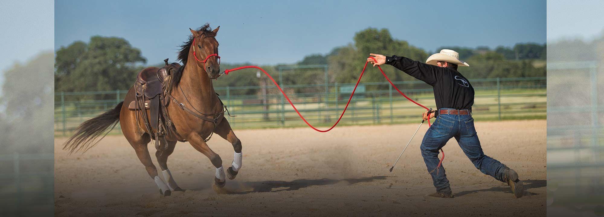 groundwork horses - 2000×720
