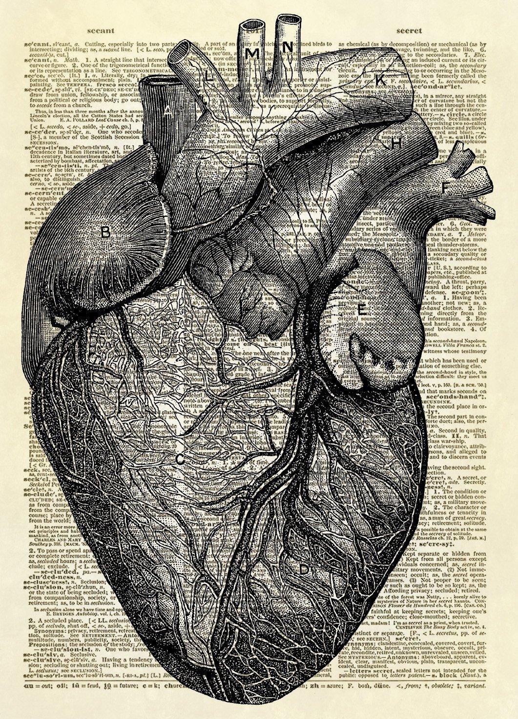 Human Heart Diagram Dictionary Art Print | Human heart ...