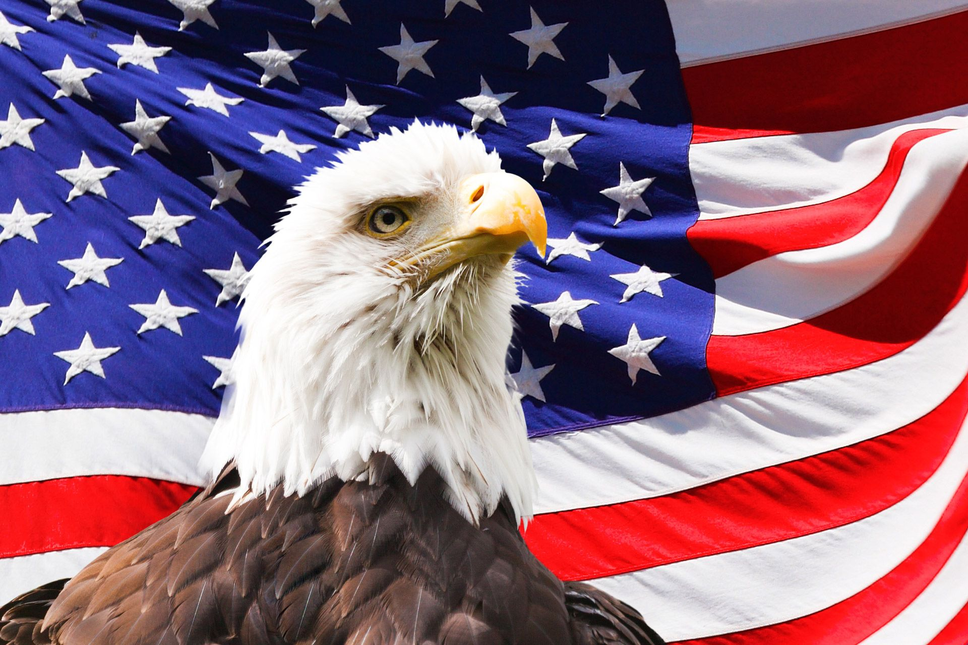 Coloring Pages United States : American bald eagle coloring page flag day fun fun