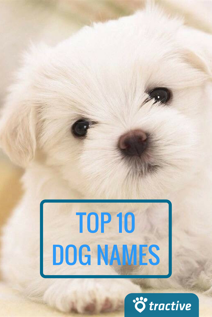 The 10 Most Popular Dog Names Tractive Blog Dog Names Popular Dog Names Most Popular Dog Names