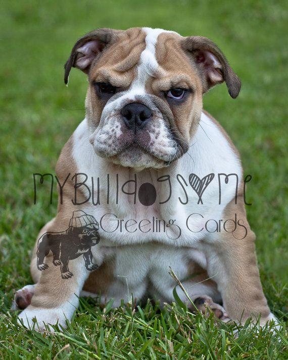 Card 22 Few More Wrinkles English Bulldog Birthday Greeting