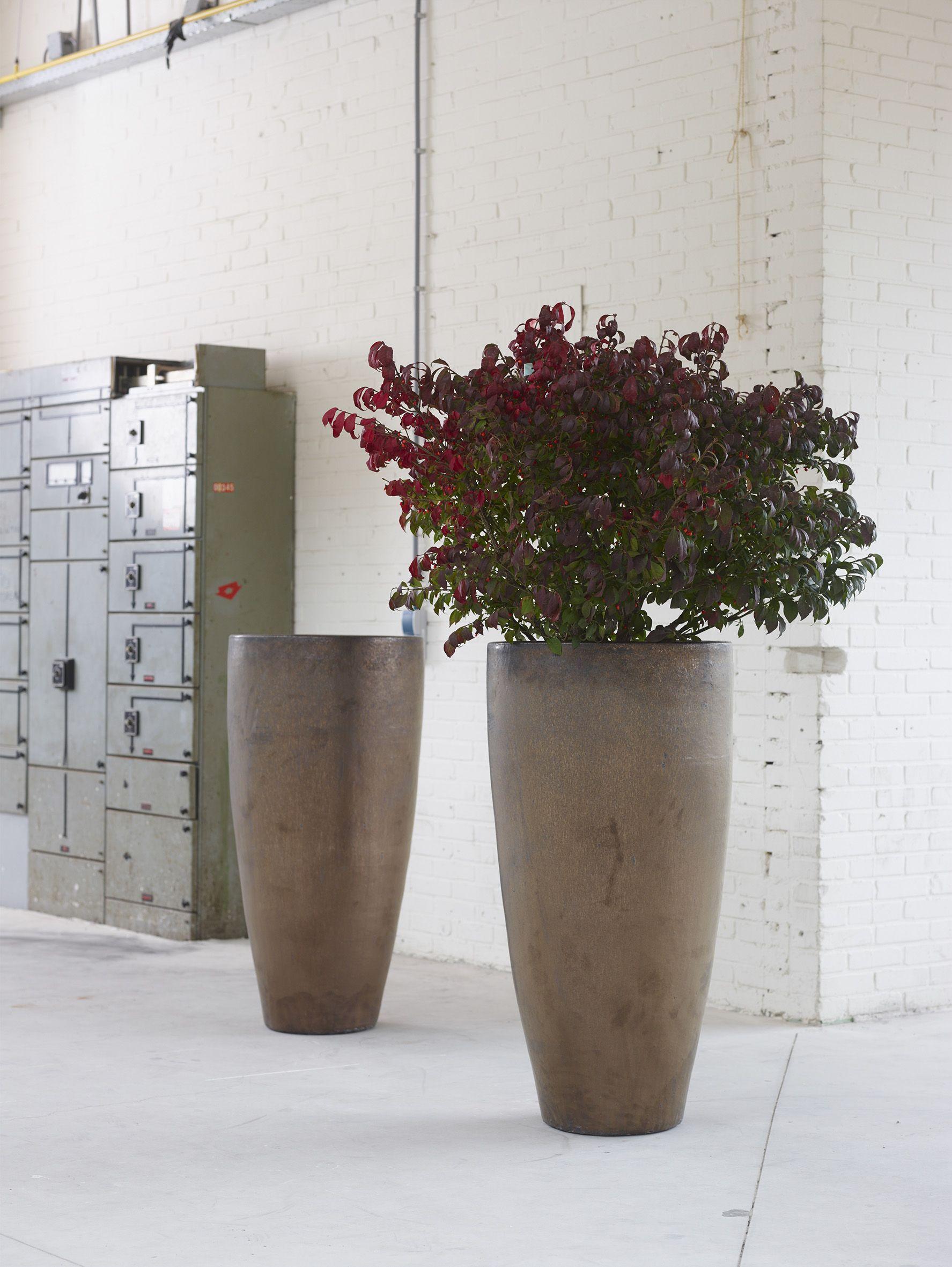 Grote Sierpot Binnen.Grote Potten Voor Binnen Top 10 Luchtzuiverende Planten Intratuin
