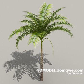 Palm Tree 3D Model Free - 2