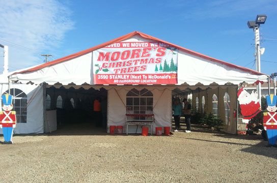 Moore's Pumpkin Patch & Christmas Tree Farm  Pleasanton
