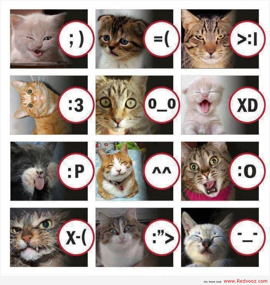 In case you were confused about the faces... Cat