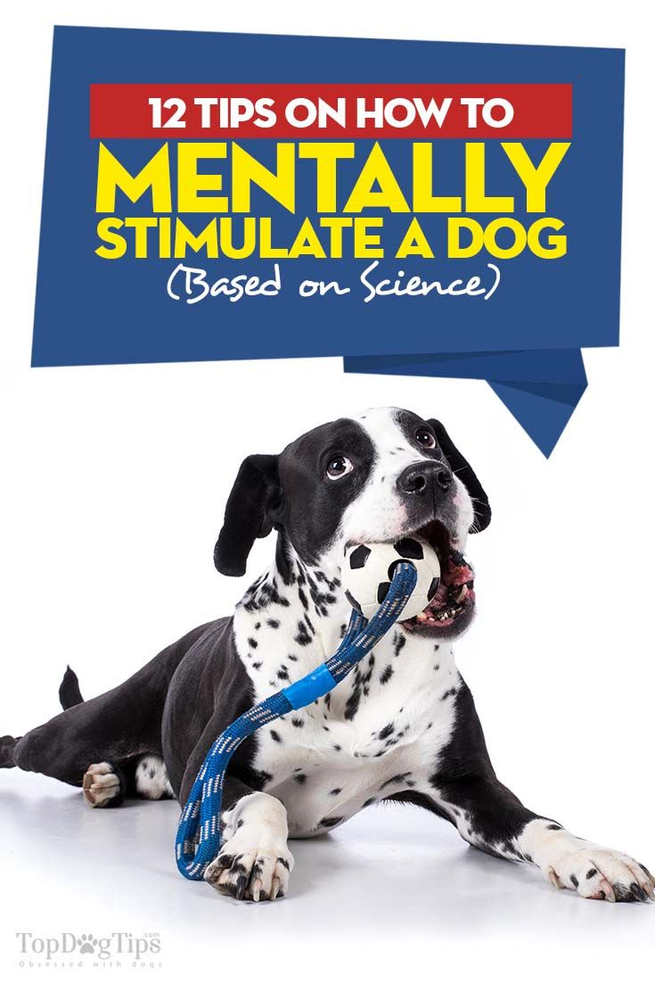 how to mentally stimulate your dog