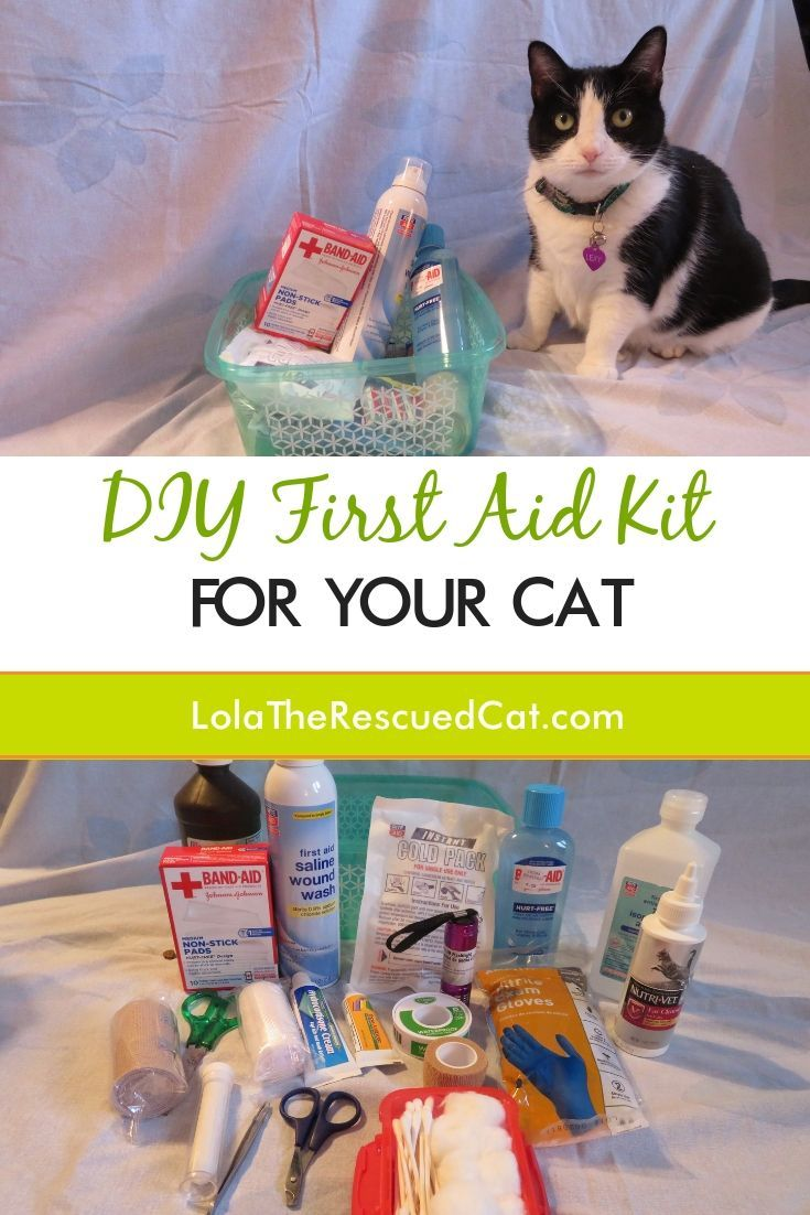 DIY First Aid Kit for Your Cat