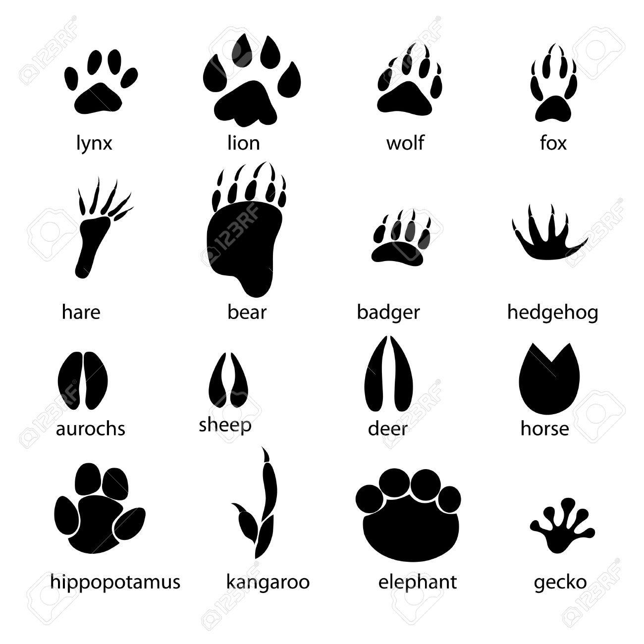Pictures Of Bear Footprints Peepsburgh