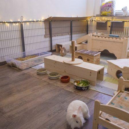 Innenhaltung Fotos Gehege kaninchen, Kaninchenkäfig und