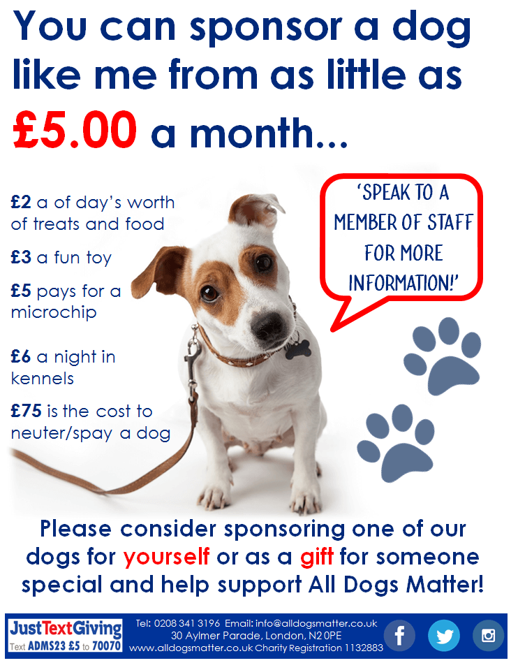 Sponsor A Dog In Kennels All Dogs Matter Animal Charities Dogs Kennel