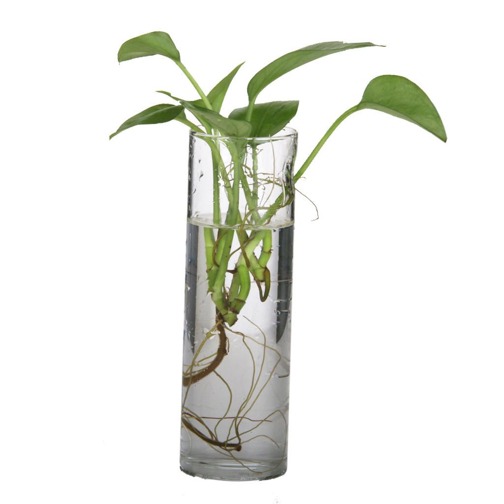 Cylinder Clear Glass Wall Hanging Vase Bottle For Plant