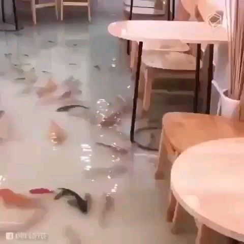 Ho Chi Minh cafe that has fish swimming around your feet! Travel Vietnam is part of Places to travel -
