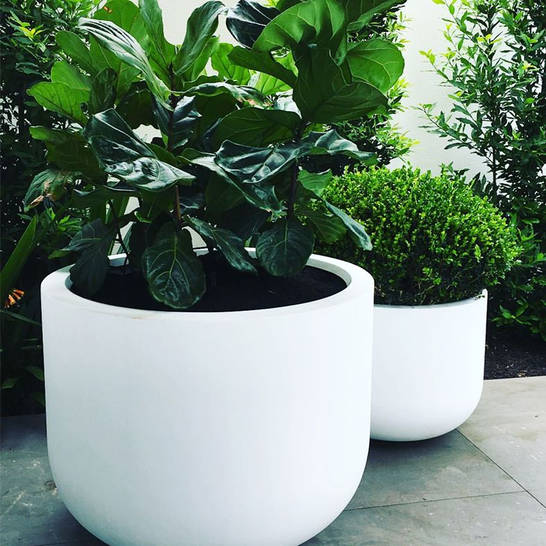 The Pietro U Planter Is A Contemporary Shaped Planter Made From Premium Grc Fibreglass Reinforced Cement A Material Which Is St Planters Plants Ficus Lyrata