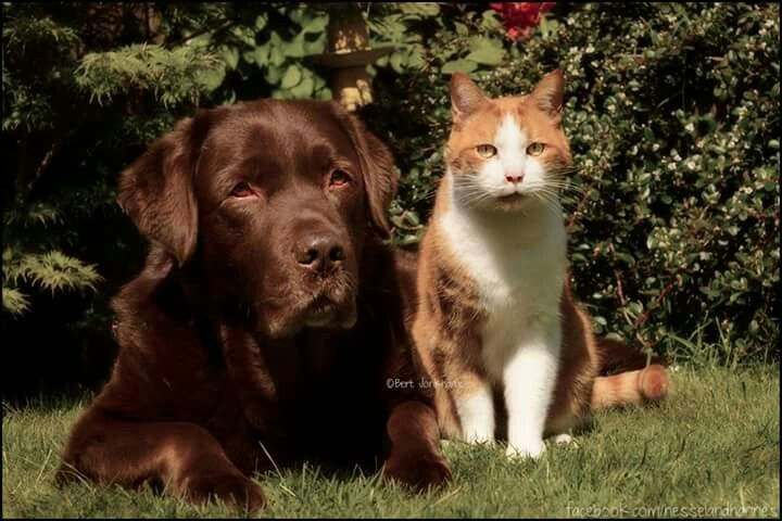 Hessel and Hannes posing in the garden.