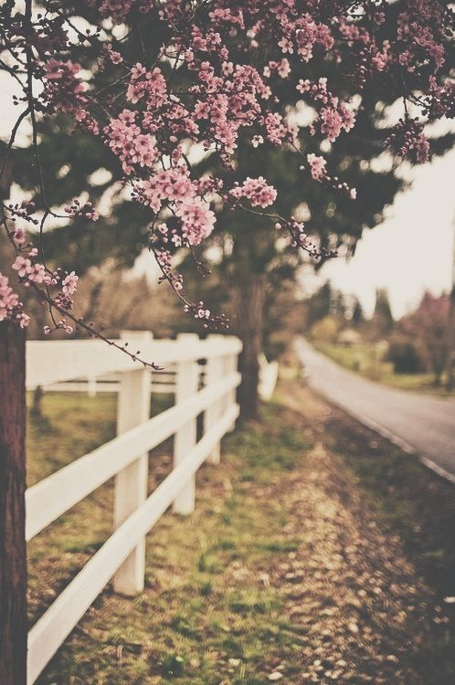Spring Spring Wallpaper Cute Wallpapers Iphone Wallpaper Vintage