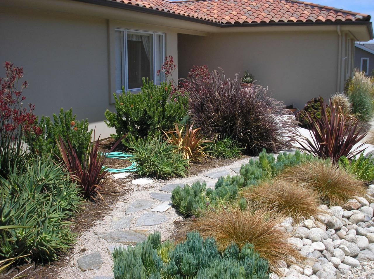 Plants Rich In Foliage Color And Texture Plant Palette Acacia