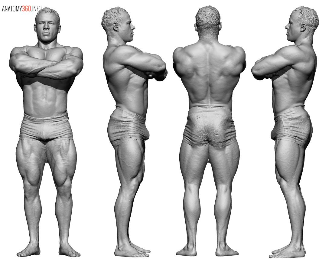 Anatomy 360 Some Body Builder Pose Reference Higher Res 3d