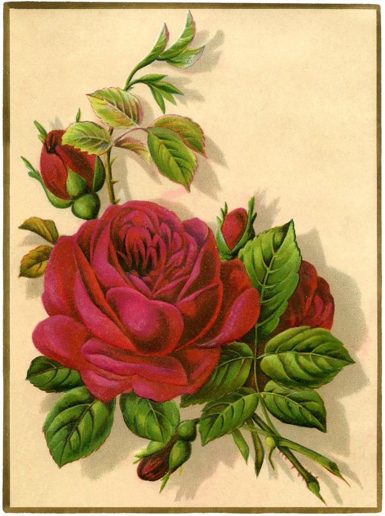 9 Red Rose Images - Pictures and Printables!