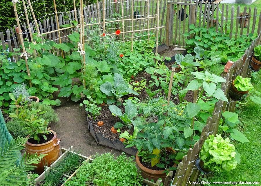 23++ Petit jardin potager bio inspirations