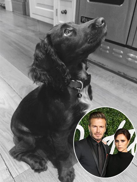 That Face Meet Victoria And David Beckham S New Baby Celebrity Dogs Pets The Beckham Family