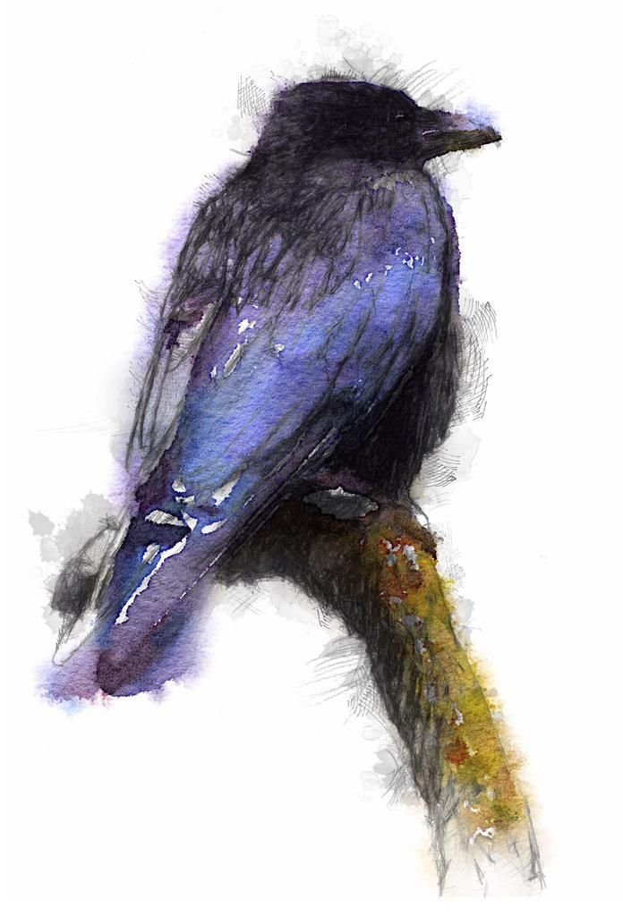 Carrion crow  A black crow in colour for a change 689 © #art #drawing #sketch, #crow http://etsy.me/1rARc0J