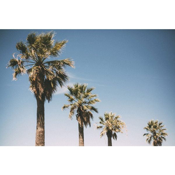 Photo Diary Palm Trees ❤ liked on Polyvore featuring summer, backgrounds and filler