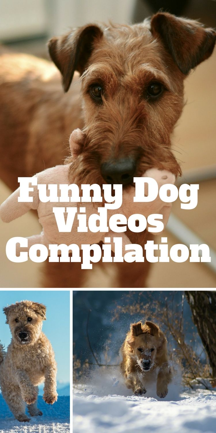 Cool Funny Dog Videos For You Guys Watch And Relax Funny Dog