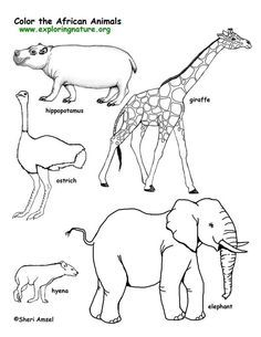 african animals coloring pages savanna african animals coloring