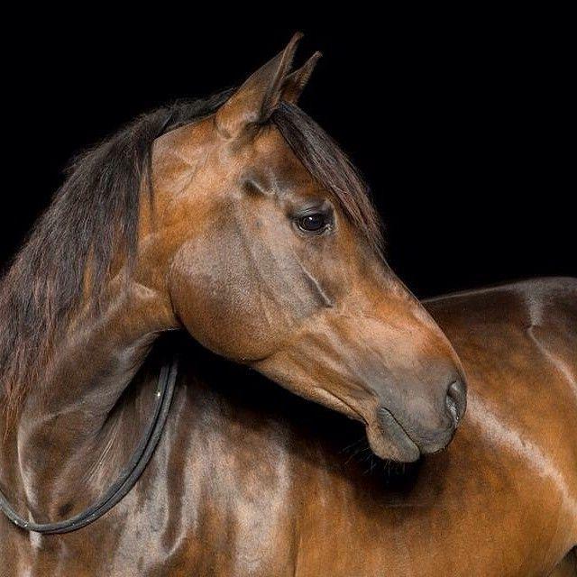 Horse Head Photography Beauty Horse Love Beautiful On