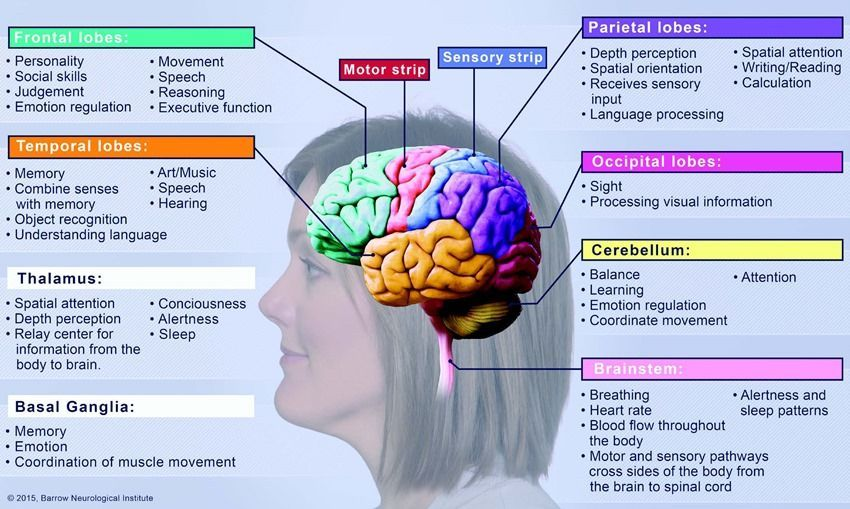 Image result for parts of the brain and their functions