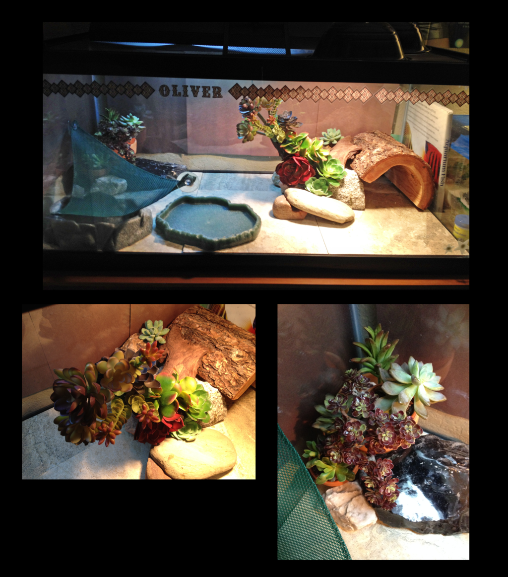 Oliver's Terrarium Update by BluuWynter Bearded dragon