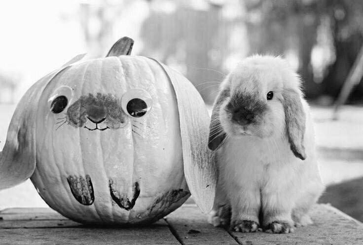 Bunny Pumpkin animals halloween bunny halloween images halloween pumpkins halloween photography