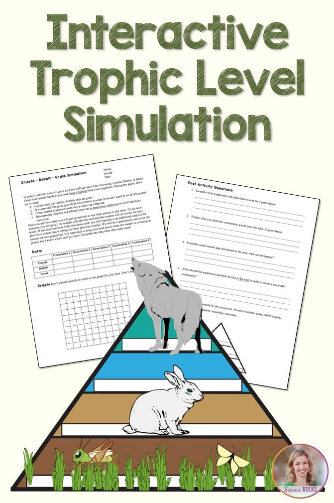coyote rabbit grass trophic level simulation interactive trophic level simulation for secondary science ecology foodchain