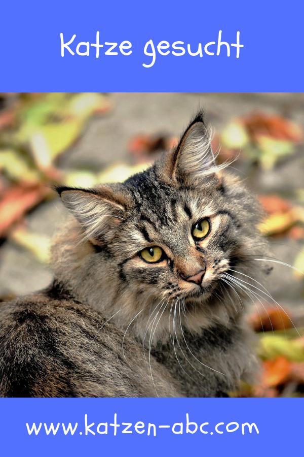 Katze Gesucht So Findet Man Die Perfekte Katze Fur Die Familie In 2020 Katzen Wilde Katzen Wildkatze
