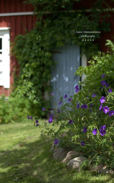 Aamu Omenatarhassa: piha ja puutarha