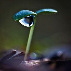 [フリー画像] 花・植物, 植物(その他), 雫・水滴, 201102150700