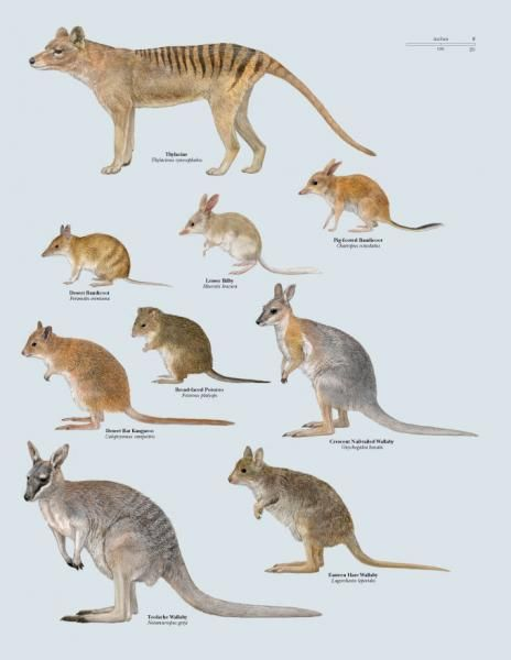 Recently Extinct Australian Marsupials Author: Toni Llobet