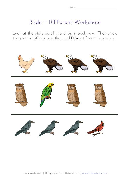 different birds worksheet menemukan perbedaan pinterest worksheets and printable worksheets. Black Bedroom Furniture Sets. Home Design Ideas