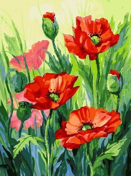 155-AS Красные маки - раскраска (Белоснежка) | Цветочные ...
