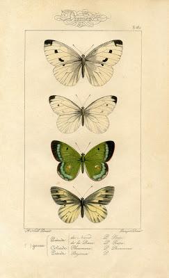 Natural History Printable Image - Moths - Butterflies