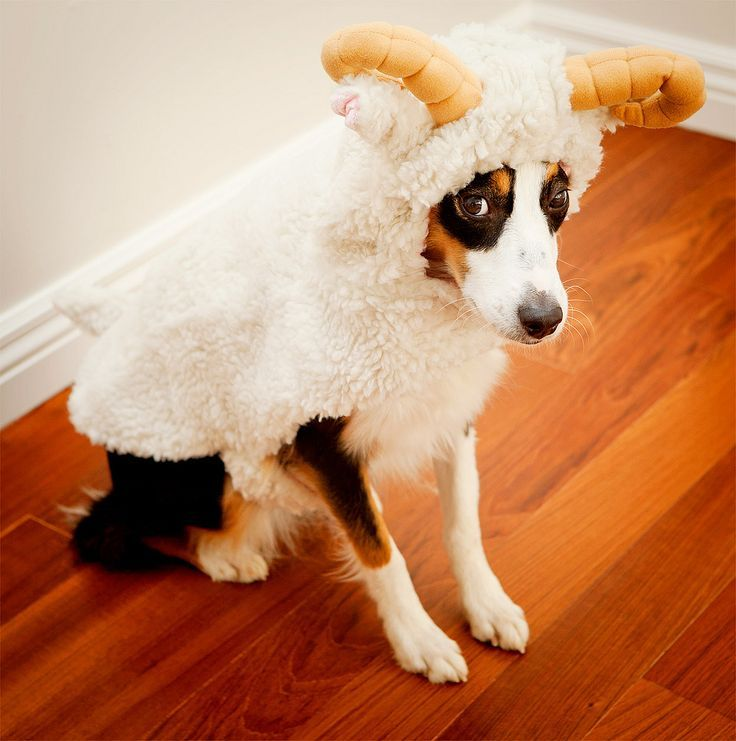 Dog Goat Costume Google Search Dog Halloween Costumes Dog