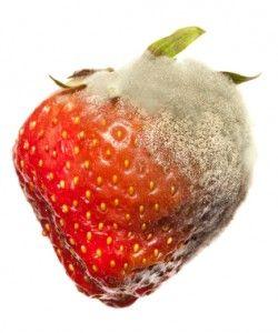 Rotting Strawberry