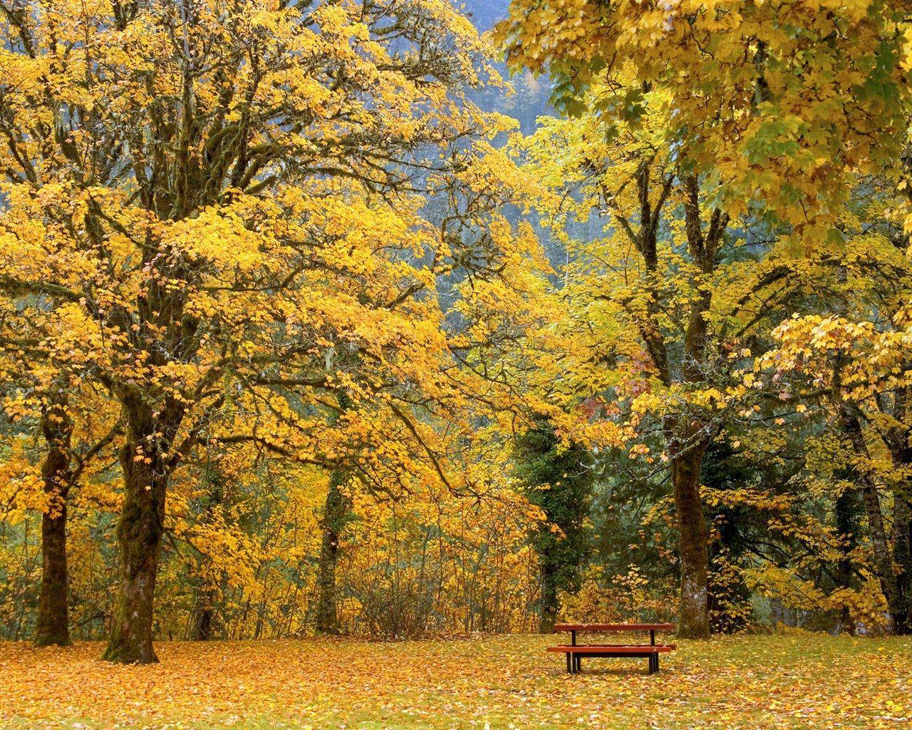 Free fall screensavers and wallpaper fall color autumn wallpapers 1280x1024 no 26 desktop