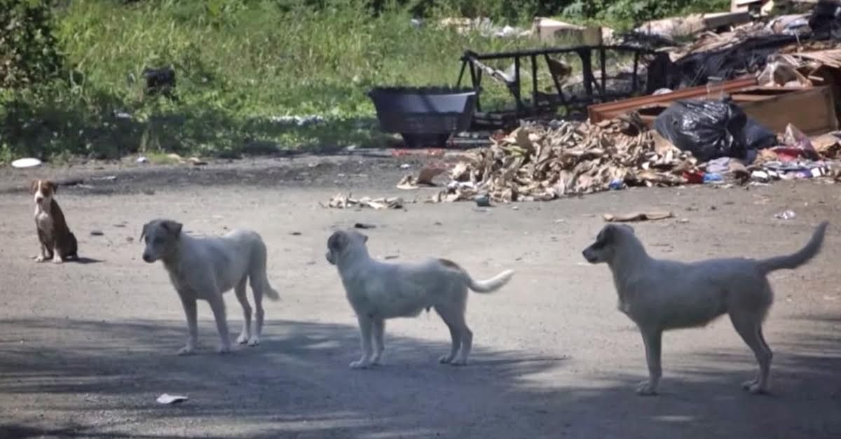 Sato Project Rescues Strays From Dead Dog Beach And Flies Them