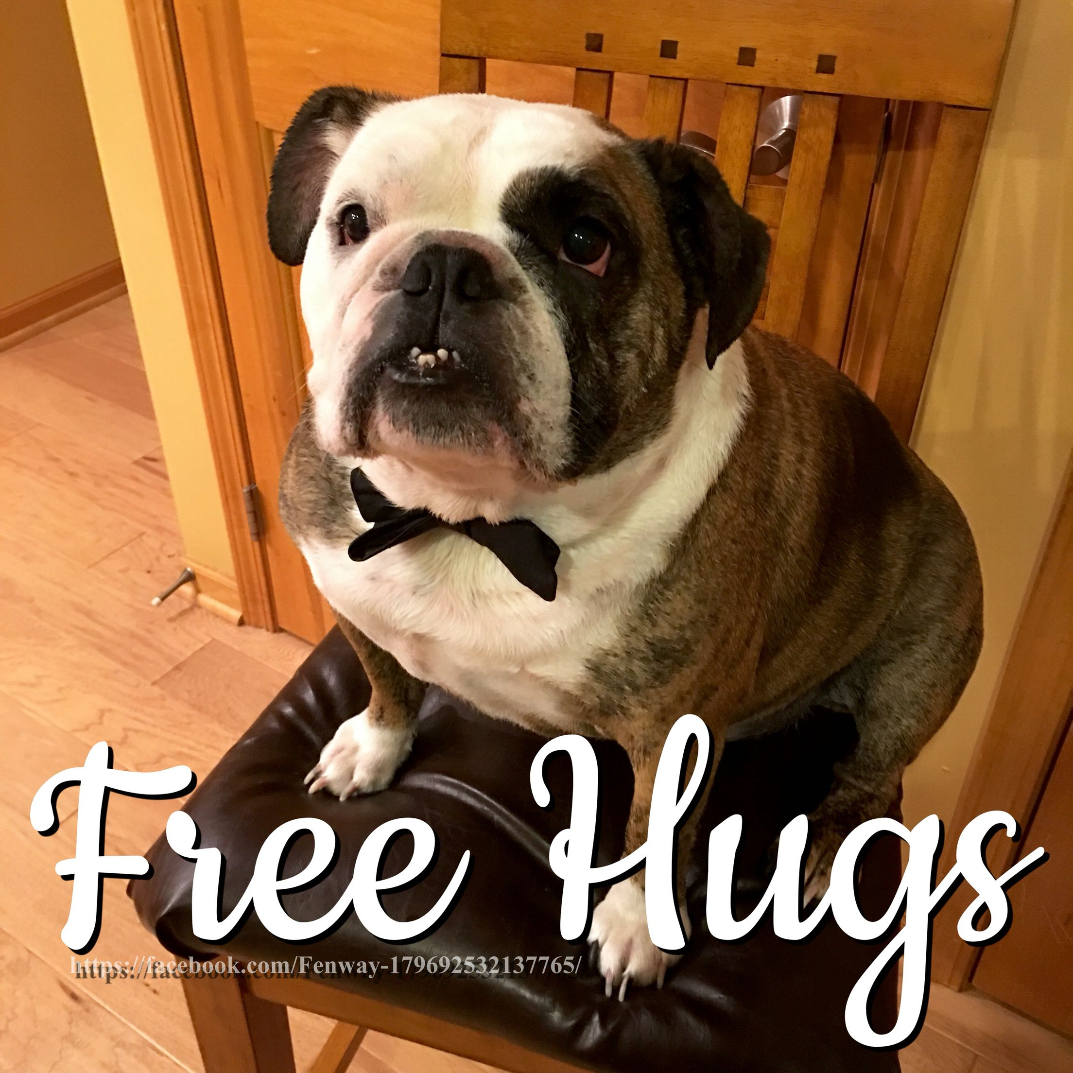21Jan16 Fenway - Bulldogs - Hugs