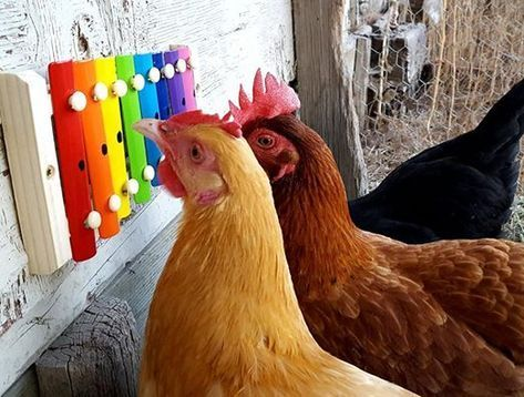 Ideas for Toys and Activities to Entertain Your Chickens | Home Design, Garden & Architecture Blog Magazine rooster
