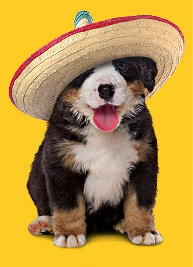 Amazing Funny Canine Adorable Dog - 1353a4ee575bac3e156a597fc903814c  Perfect Image Reference_41211  .jpg