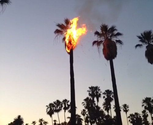 Six Photos Of Los Angeles Palm Trees Set On Fire By Fireworks Los Angeles Palm Trees Photo Six Photo