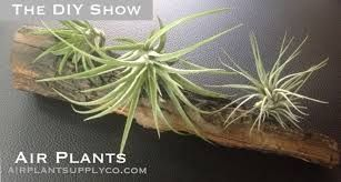 Air Plants Pictures And Names