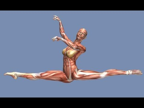 How to Grand Jete Muscle Anatomy Training Program EasyFlexibility ...